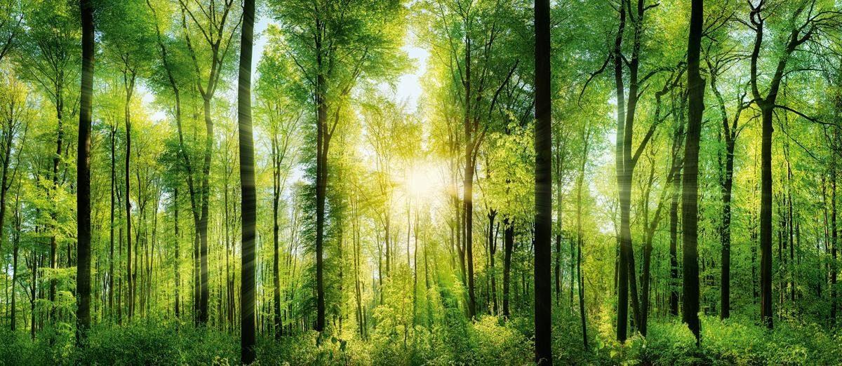 EUROGRAPHICS Deco Panel »Green Sunshine«, 115/50 cm