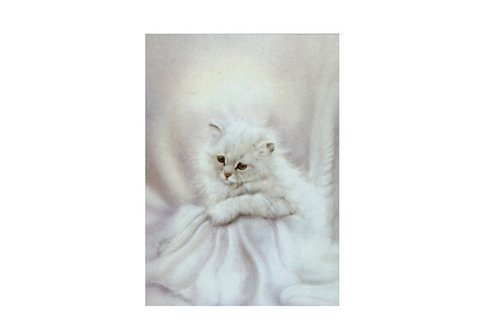 Home affaire Wandbild Motiv »Romantic Kitten« in weiß
