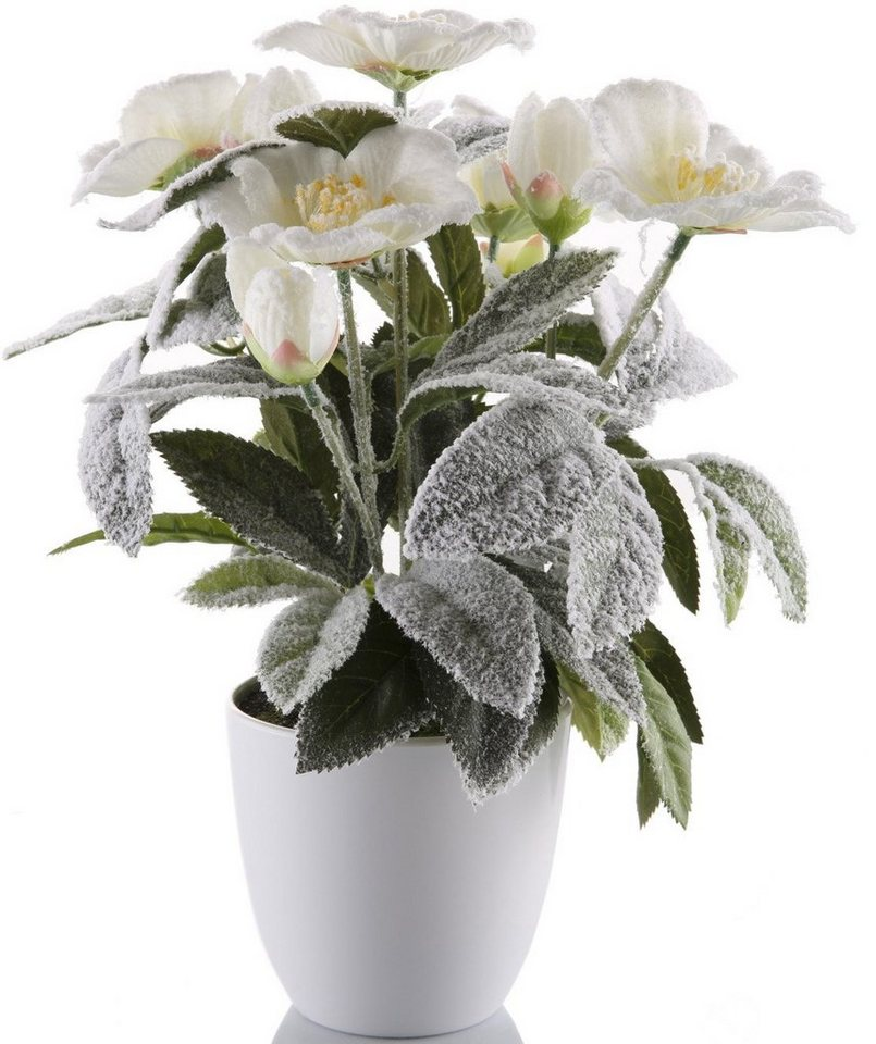 Kunstblume »Christrose«, leicht beschneit in weiß/grün