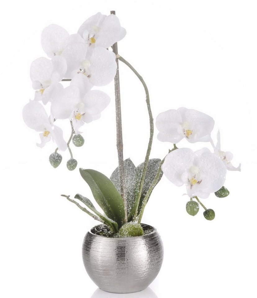Orchidee leicht beschneit in weiß/silberfarben