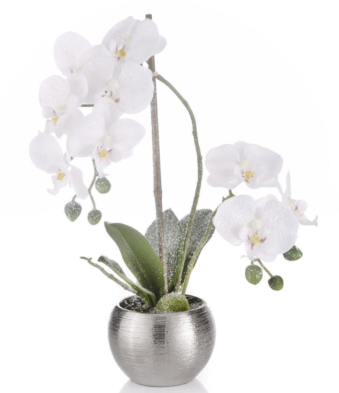 Orchidee leicht beschneit