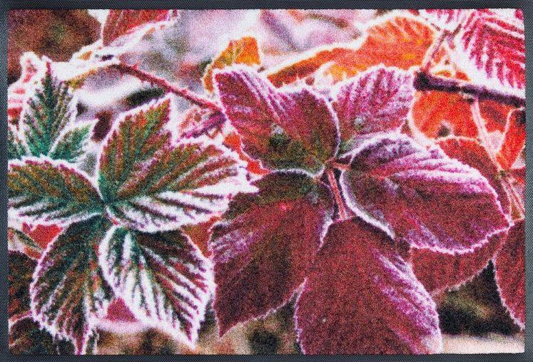 Fußmatte »Frozen Leaves«, wash+dry by Kleen-Tex, rechteckig, Höhe 7 mm, rutschhemmend beschichtet