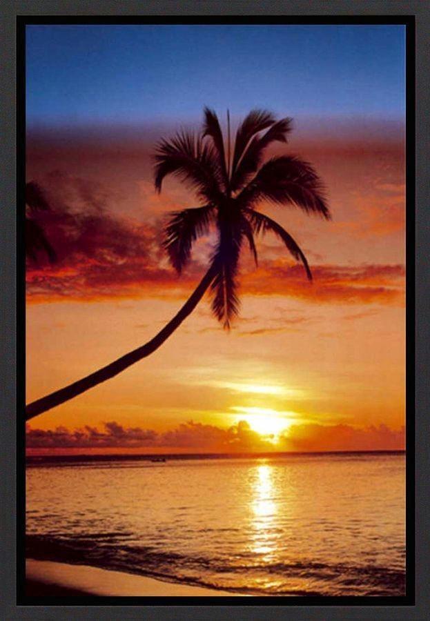 Premium Picture Wandbild »Palme im Sonnenuntergang«, 60/90 cm in orange/braun