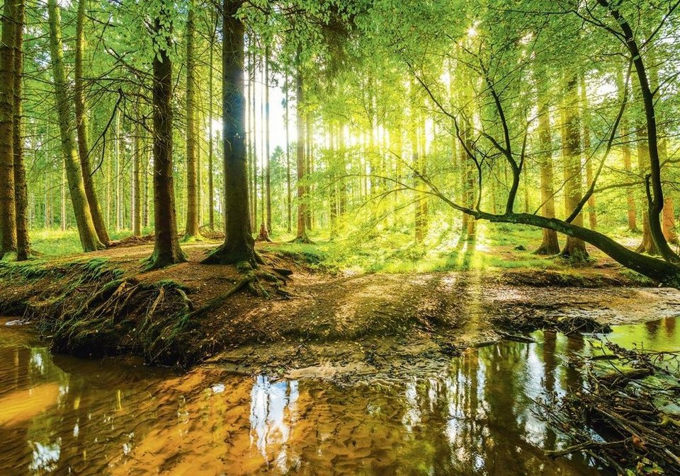 Home affaire, Leinwandbild, »G. Albers: Wald mit Bach«, 100/70 cm in Braun