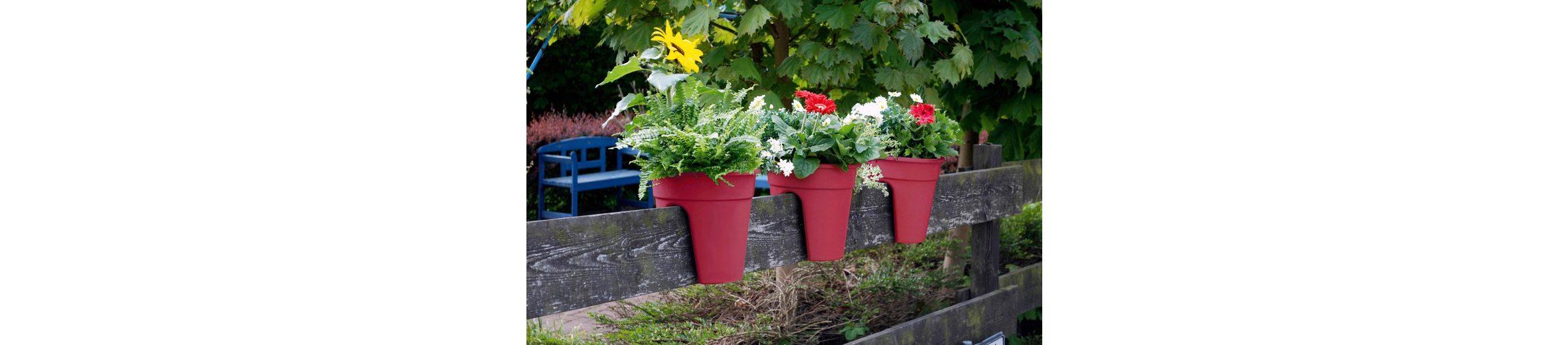 Set: Pflanztopf »Flowerclip«, 3 Stk., beere