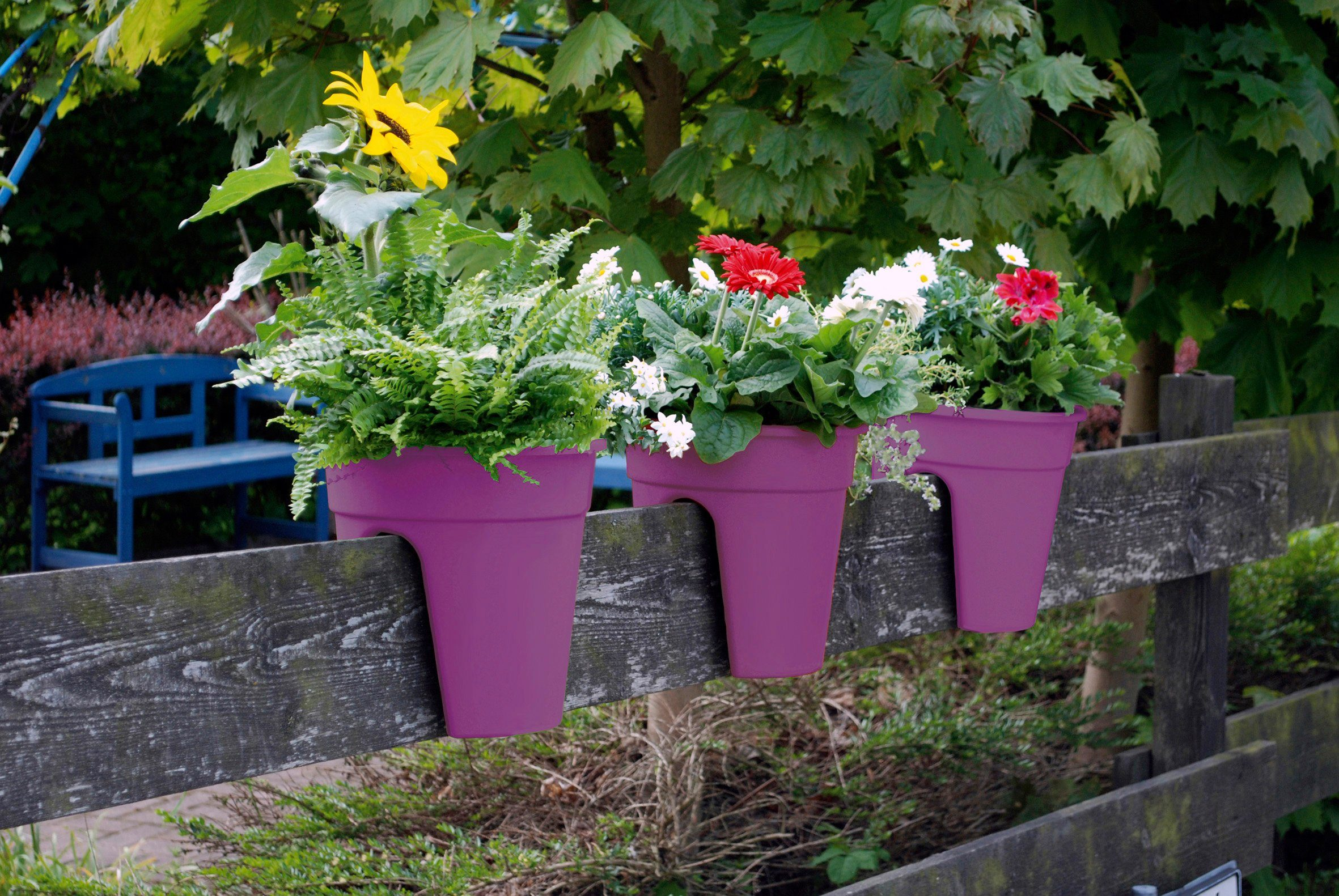 Set: Pflanztopf »Flowerclip«, 3 Stk., lila