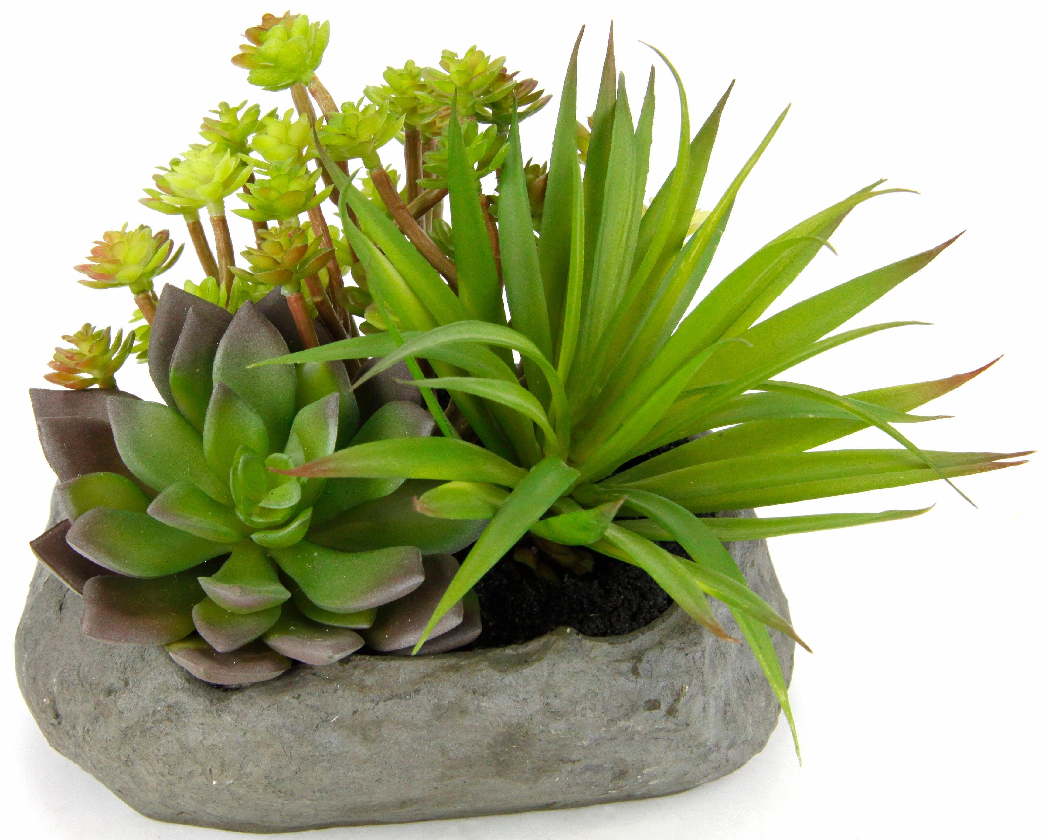 Home affaire Kunstpflanze »Succulente« auf Stein