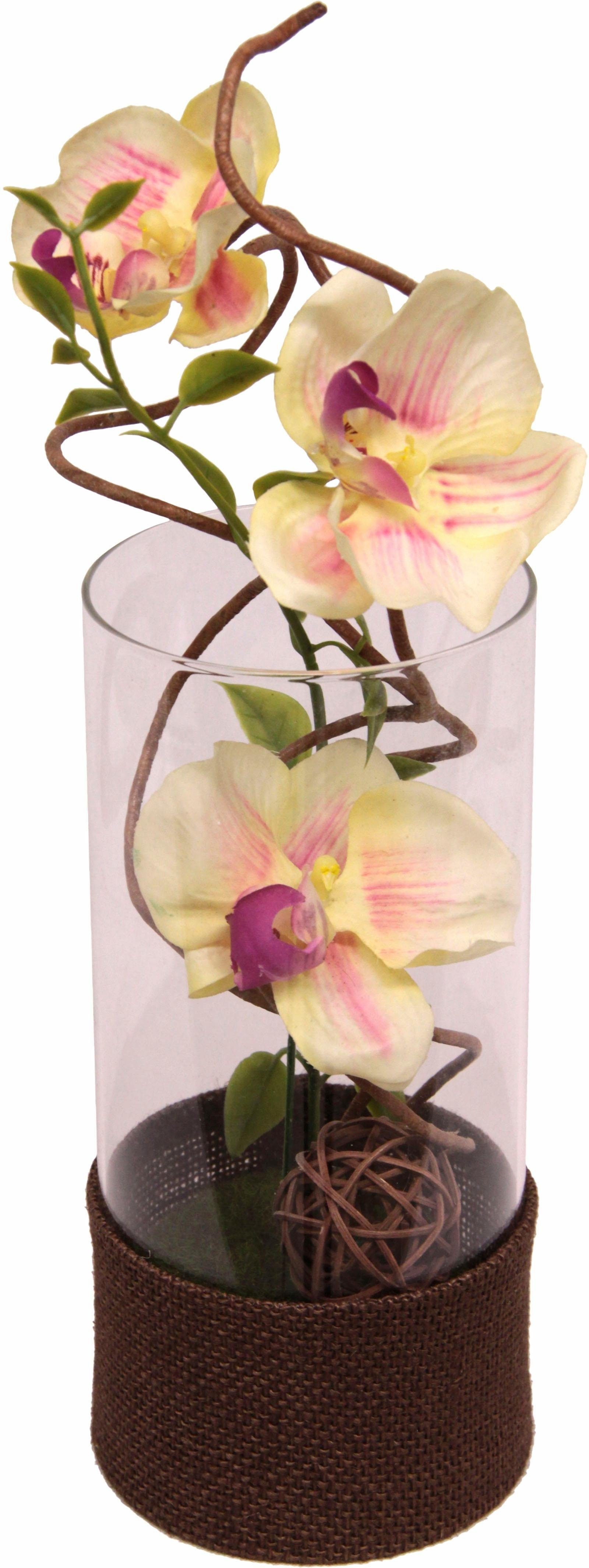 Home affaire Kunstblume »Orchidee« im Glas