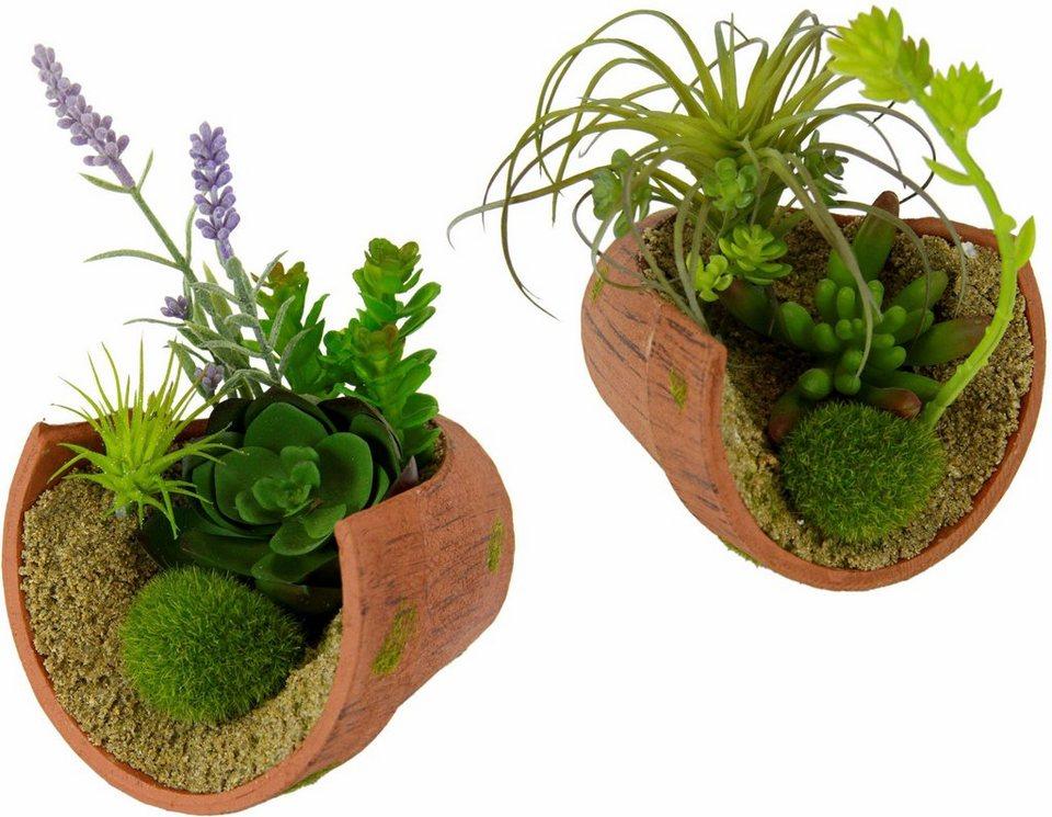 Home affaire Kunstpflanze »Succulente« (2 Stck.) in grün