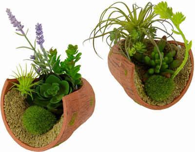 Kunstpflanze »Succulente« Succulente, I.GE.A., Höhe 17, 12 cm