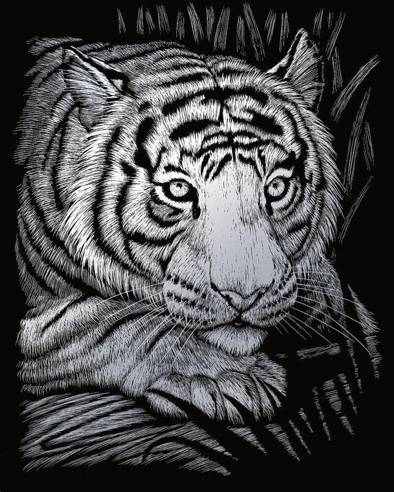 """Kratzbild """"Weißer Tiger"""""""