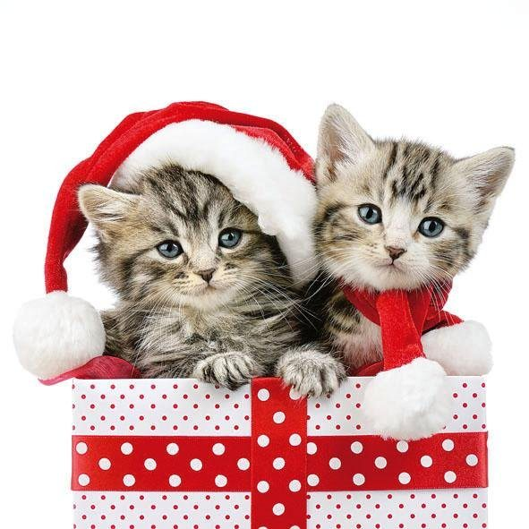 "Serviette ""Christmas Kitties"""