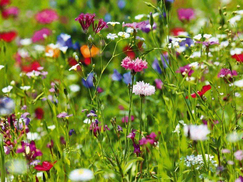 Artland Poster oder Leinwandbild »Botanik Blumenwiese Fotografie Grün« in Grün