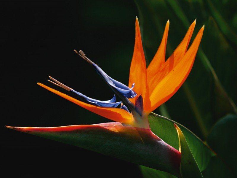 Artland Poster oder Leinwandbild »Botanik Blumen Fotografie Orange« in Orange