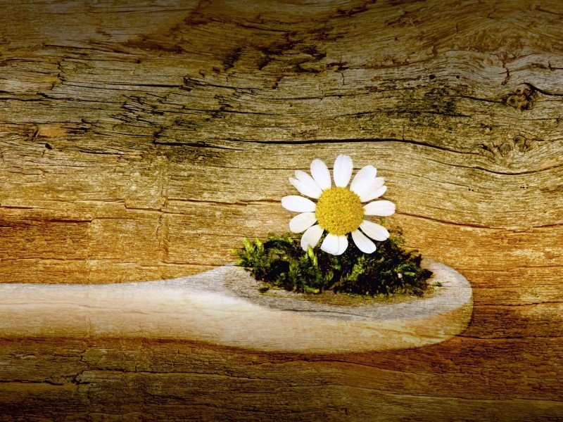 Artland Poster oder Leinwandbild »Botanik Blumen Fotografie Braun« in Braun