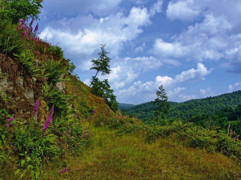 Artland Poster oder Leinwandbild »Landschaften Wald Fotografie Grün« in Grün