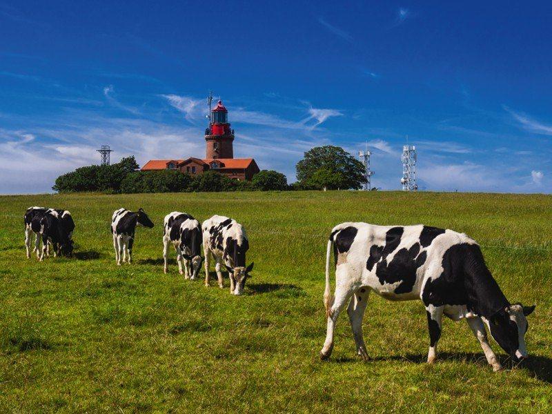 Artland Poster oder Leinwandbild »Tiere Haustiere Kuh Fotografie Grün« in Grün
