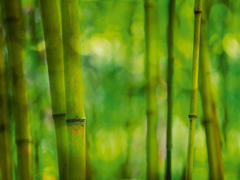 Artland Poster oder Leinwandbild »Botanik Gräser Bambus Fotografie Grün« in Grün
