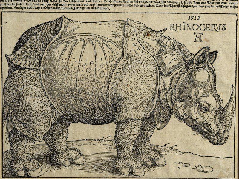 Artland Poster oder Leinwandbild »Tiere Wildtiere Graphische Kunst Creme« in Creme