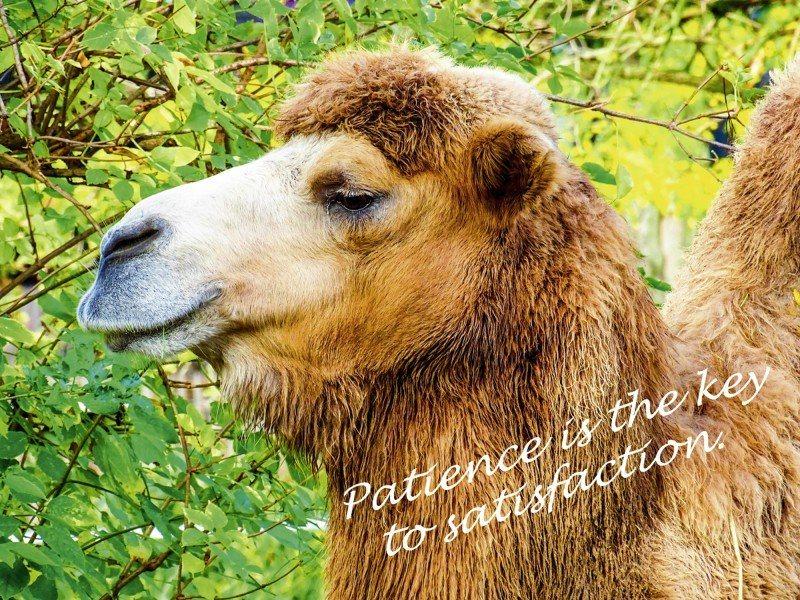 Artland Poster oder Leinwandbild »Tiere Wildtiere Kamel Fotografie Braun« in Braun
