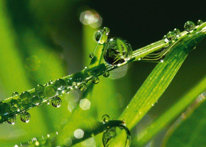 Artland Poster oder Leinwandbild »Botanik Gräser Gras Fotografie Grün« in Grün