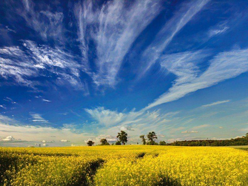 Artland Poster oder Leinwandbild »Landschaften Felder Fotografie Blau« in Blau