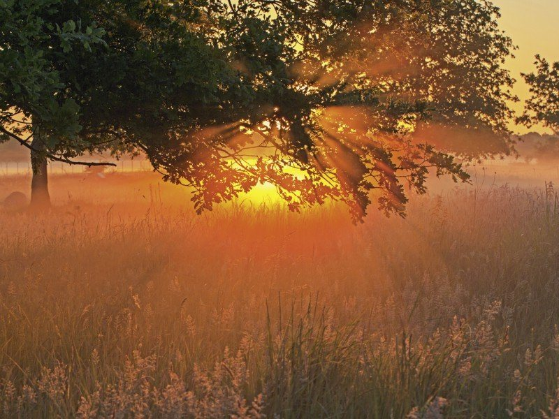 Artland Poster oder Leinwandbild »Landschaften Sonnenaufgang Fotografie Orange« in Orange
