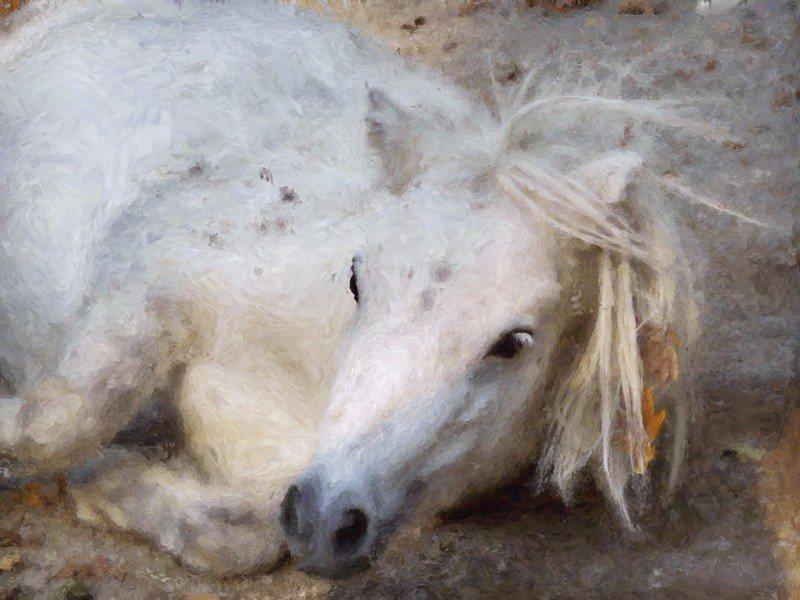 Artland Poster oder Leinwandbild »Tiere Haustiere Pferd Malerei Weiß« in Weiß