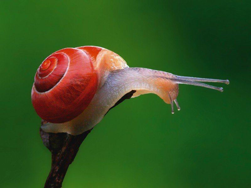 Artland Poster oder Leinwandbild »Tiere Insekten Fotografie Grün« in Grün