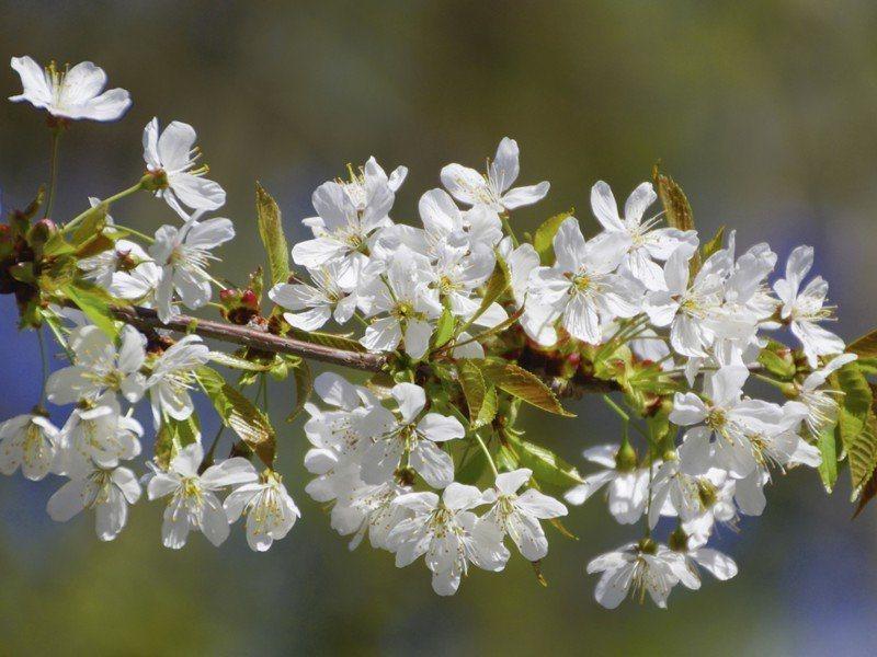 Artland Poster oder Leinwandbild »Botanik Blumen Fotografie Weiß« in Weiß