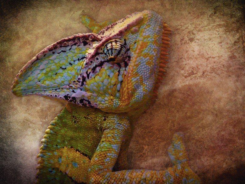 Artland Poster oder Leinwandbild »Tiere Wildtiere Reptilien Malerei Ocker« in Ocker
