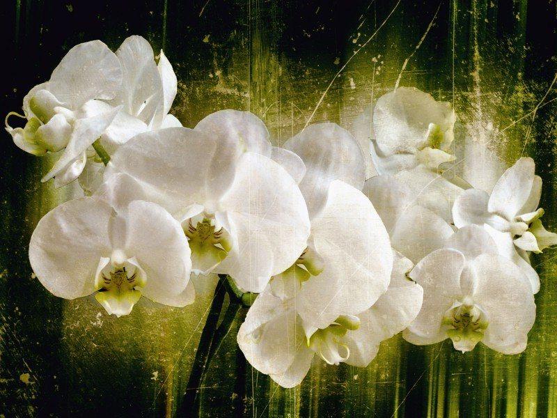 Artland Poster oder Leinwandbild »Botanik Blumen Orchidee Digitale Kunst Weiß« in Weiß