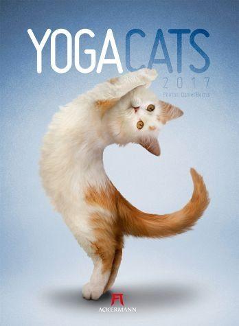 Kalender »Yoga Cats 2017«