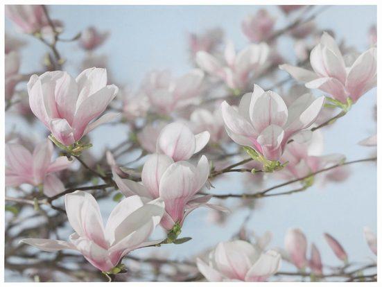 Fototapete »Magnolia«, naturalistisch