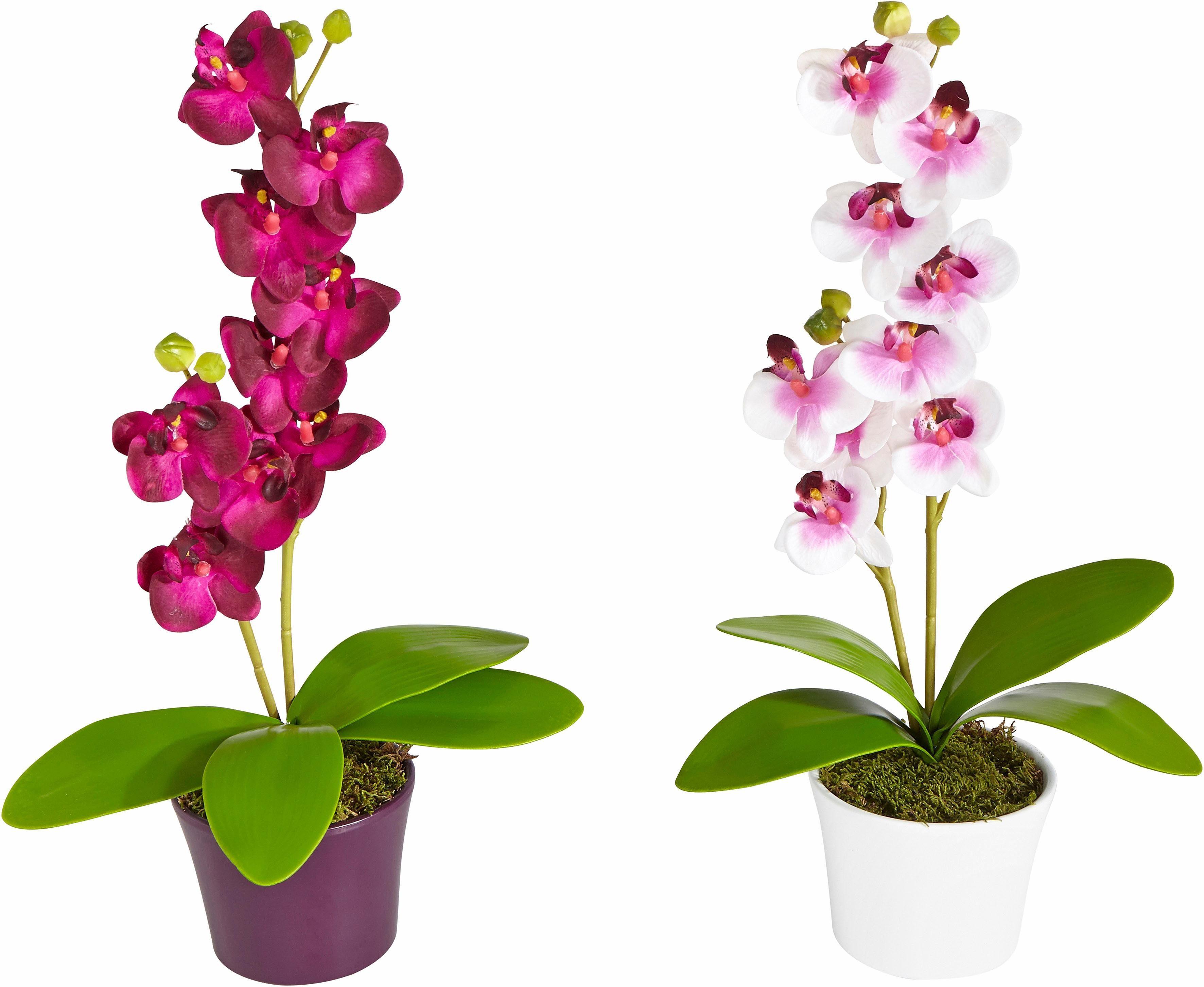 Home affaire Kunstblume »Orchidee« (2tlg.)