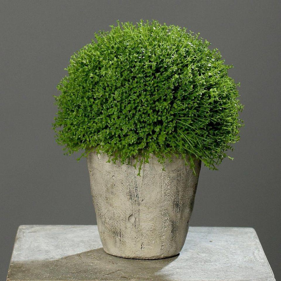 Home affaire Kunstpflanze »Bubi-Kopf im Topf« in grün