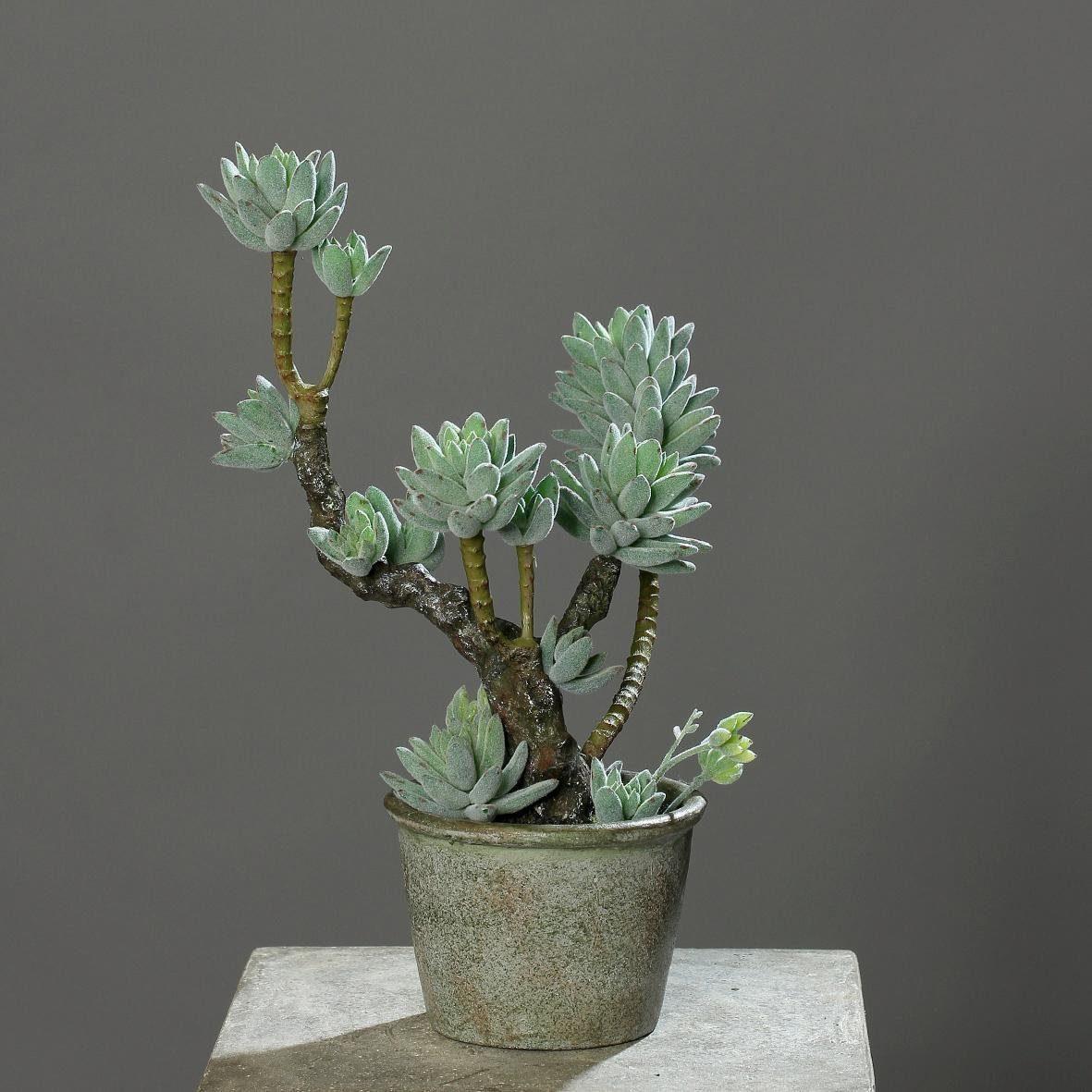 Home affaire Kunstpflanze »Sukkulenten im Topf«