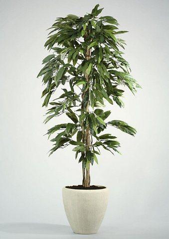 Home affaire Kunstpflanze »Mangobaum« in grün
