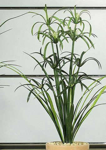 Home affaire Kunstpflanze »Papyrusbusch«