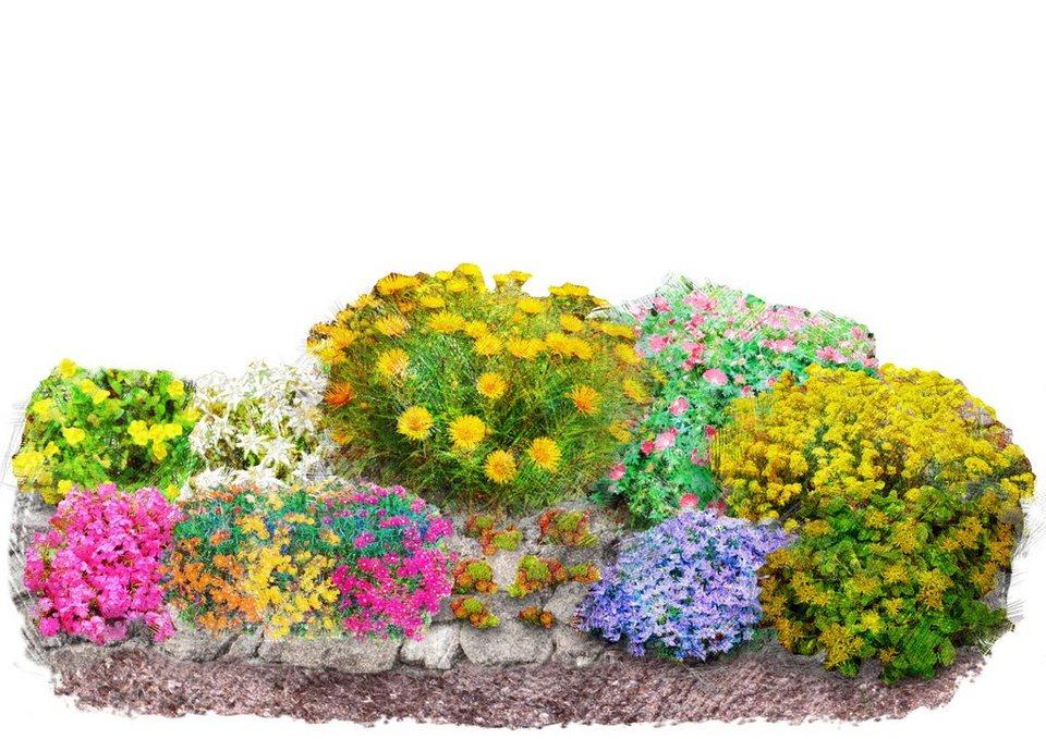 steingarten bilder pflanzen, pflanzenset »bunter steingarten«, 12 pflanzen   otto, Design ideen