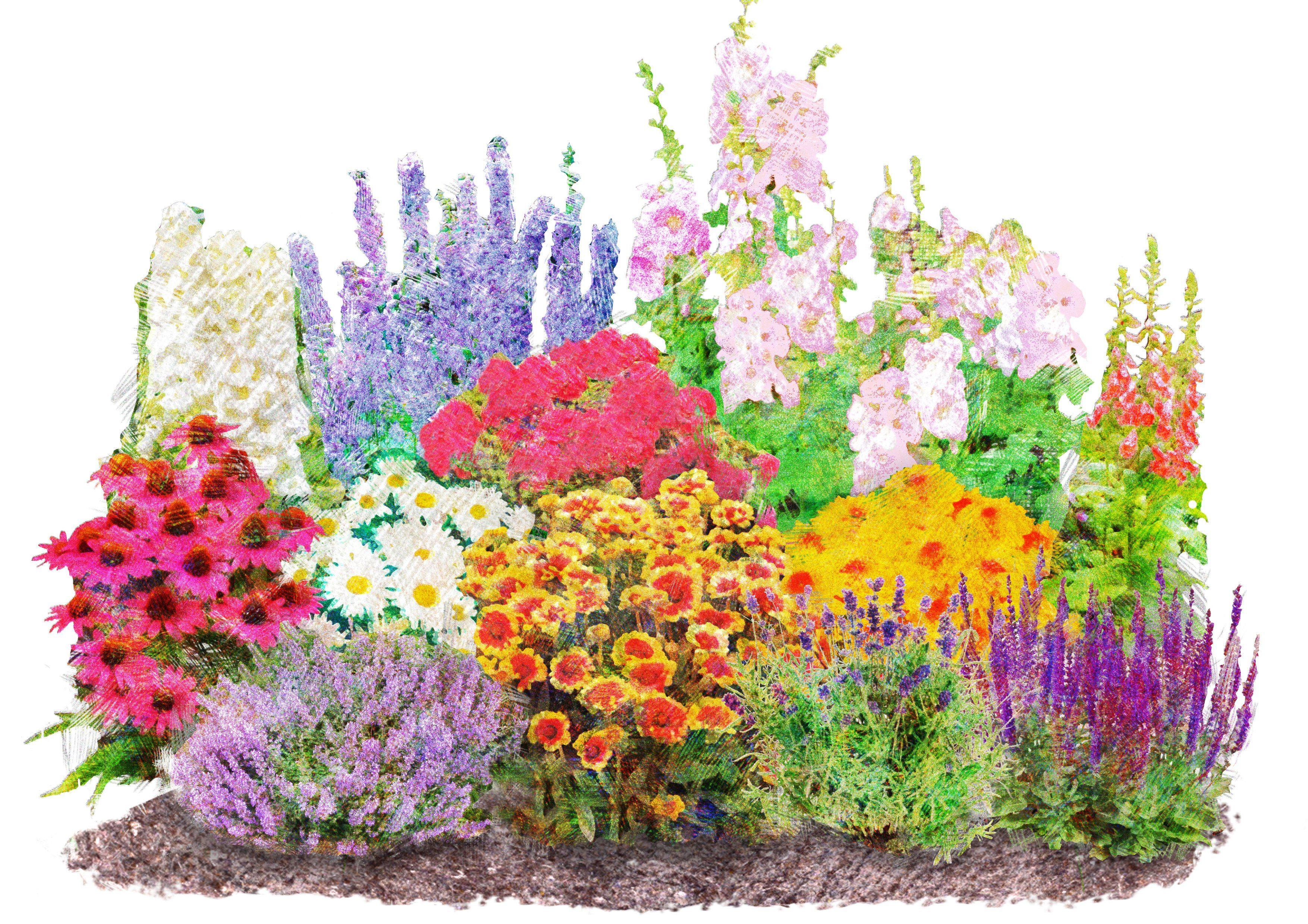 Beetpflanzen-Set »Landhausgarten« (12 Pfl.)