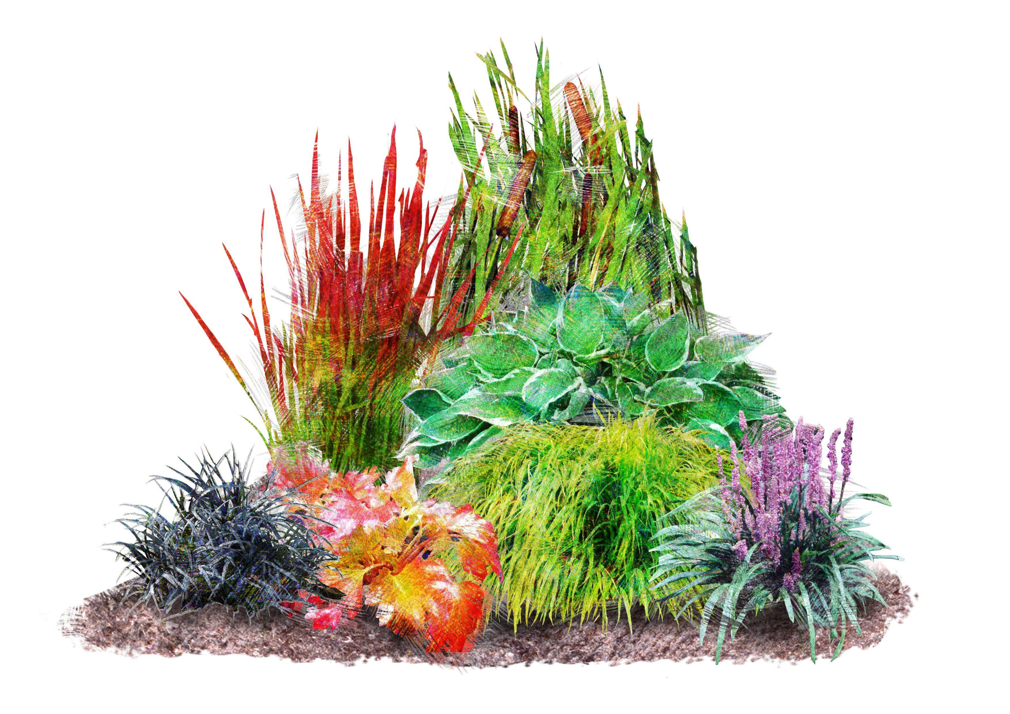 Pflanzenset »Japan-Staudenbeet« (7 Pfl.)