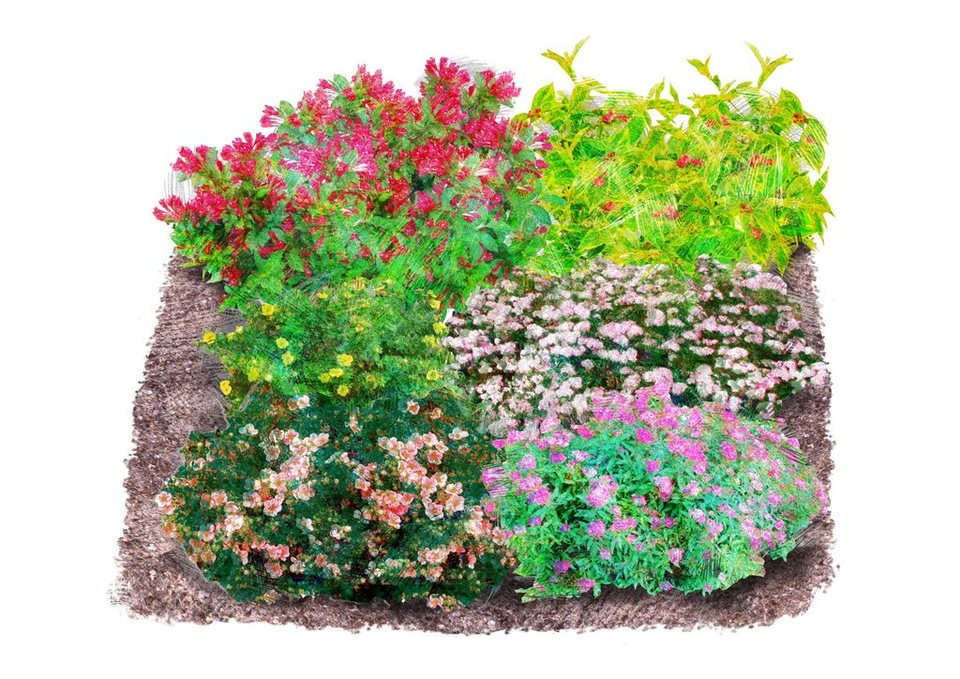 Set: Gehölz »Blühend« 6 prachtvolle Pflanzen in bunt