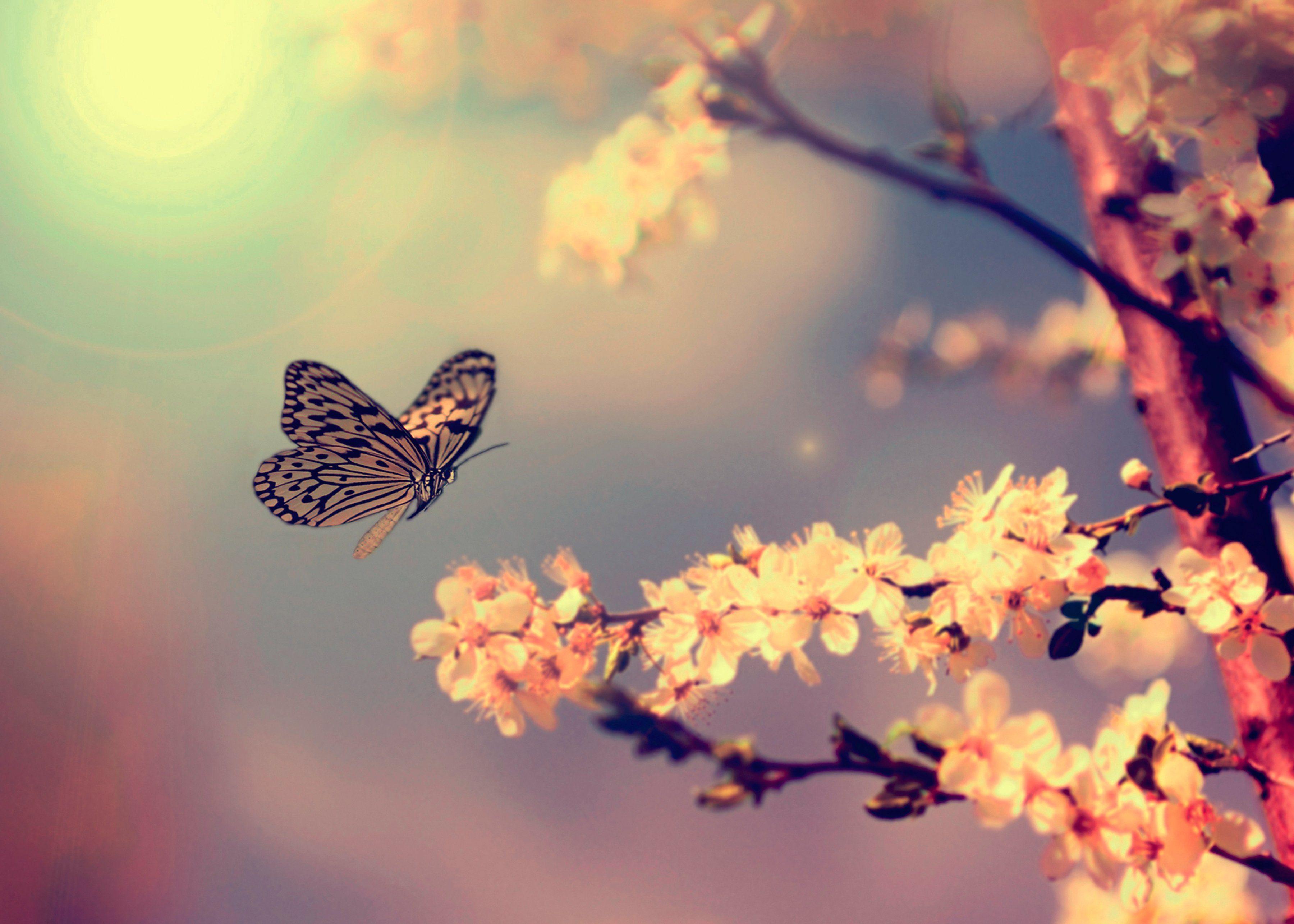 Leinwandbild »Frühlingsmoment«