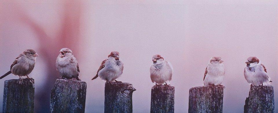 Leinwandbild »Morgenzwitscher« in natur