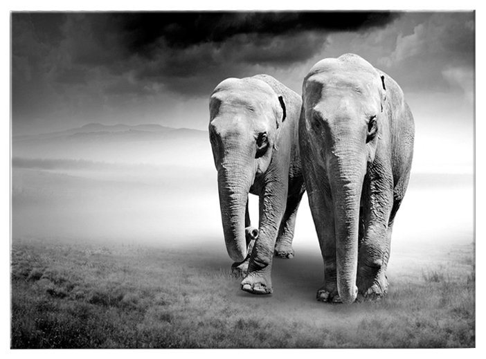 Glasbild »Elefanten« in schwarz