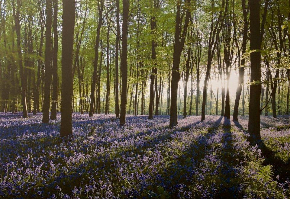 Leinwandbild »Glockenblumenwald« in grün