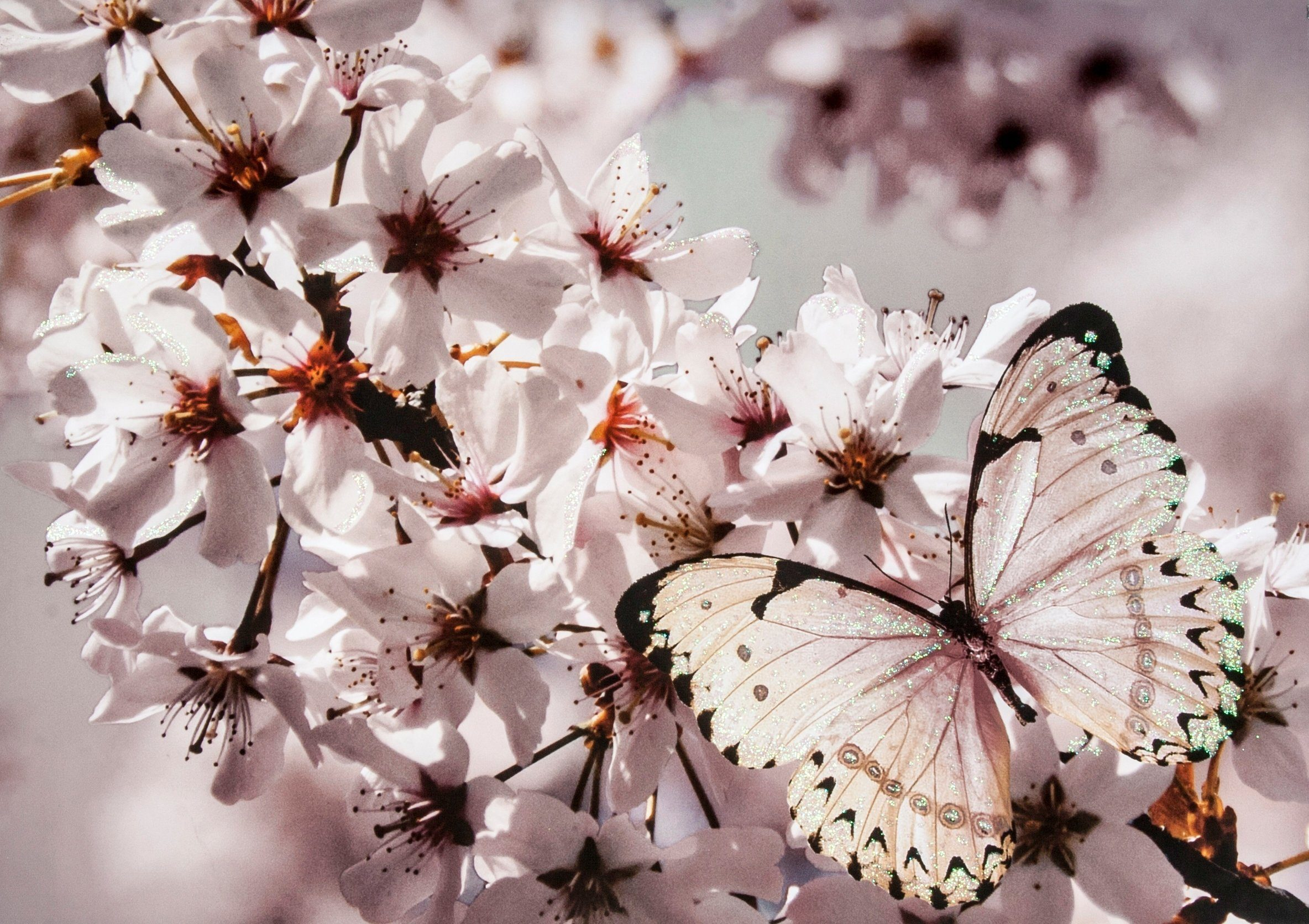 Leinwandbild »Schmetterling«, Glitzer
