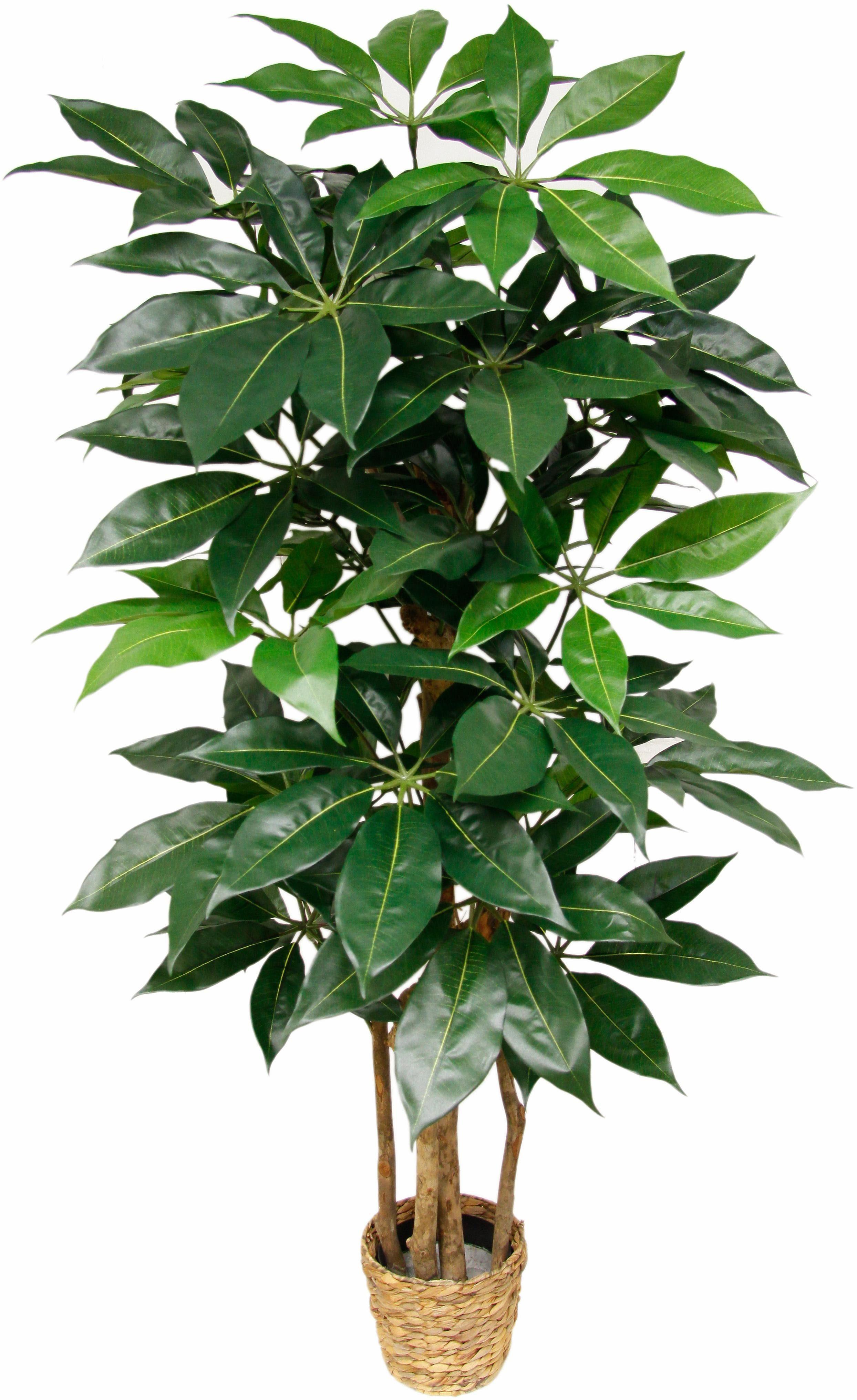 Kunstpflanze »Schefflera«