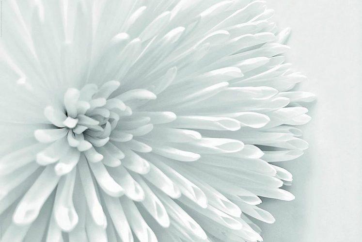 INOSIGN Deco-Panel »White Flower Heart«, Blume, 90/60 cm